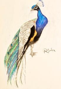 Peacock Composition